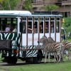 Experience The Wildlife Adventure at Bali Safari and Marine Park