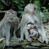 Take Part In Conserving Sacred Monkey Forest