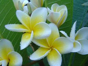 Flora and Fauna of Bali
