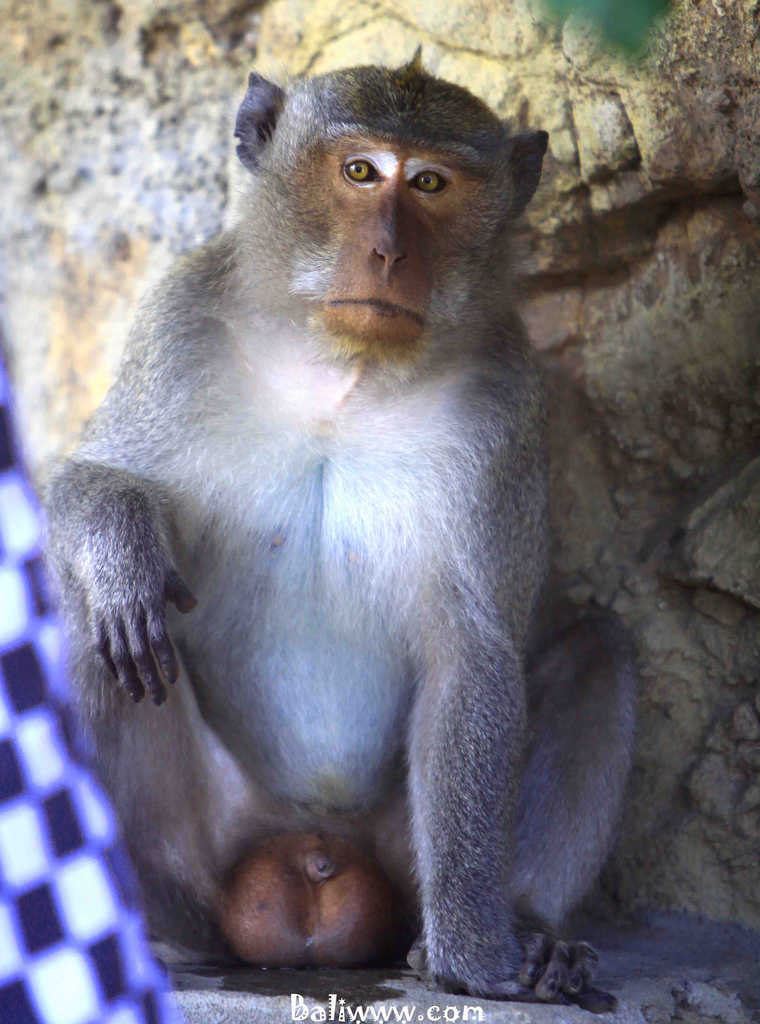 Monkey at Pulaki Temple
