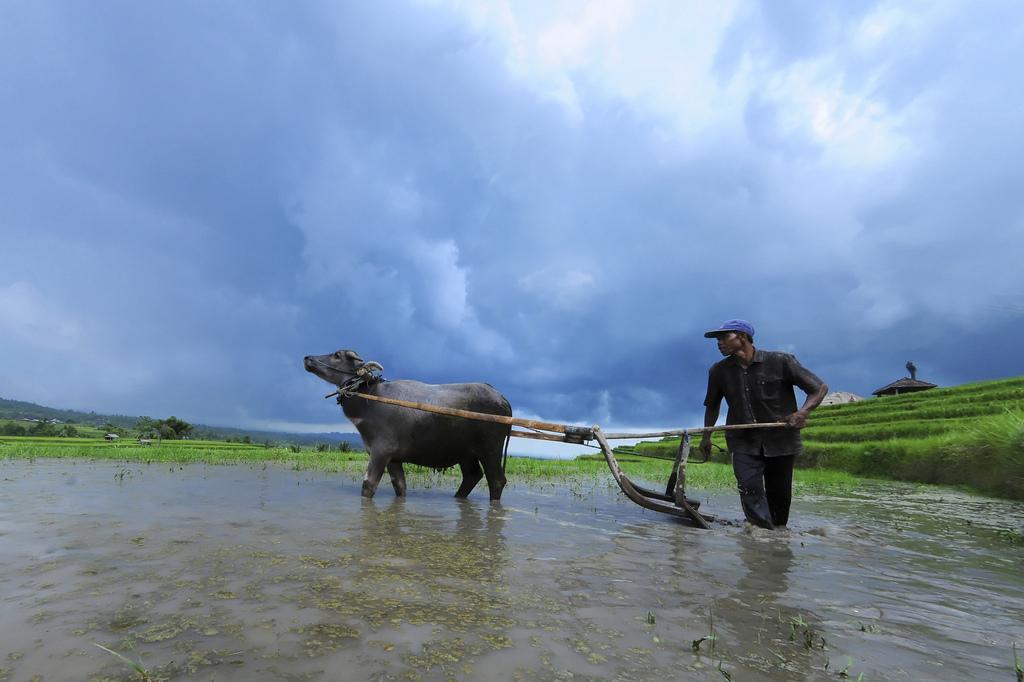Kearifan Pertanian Bali, Sampai Kapan Bertahan?